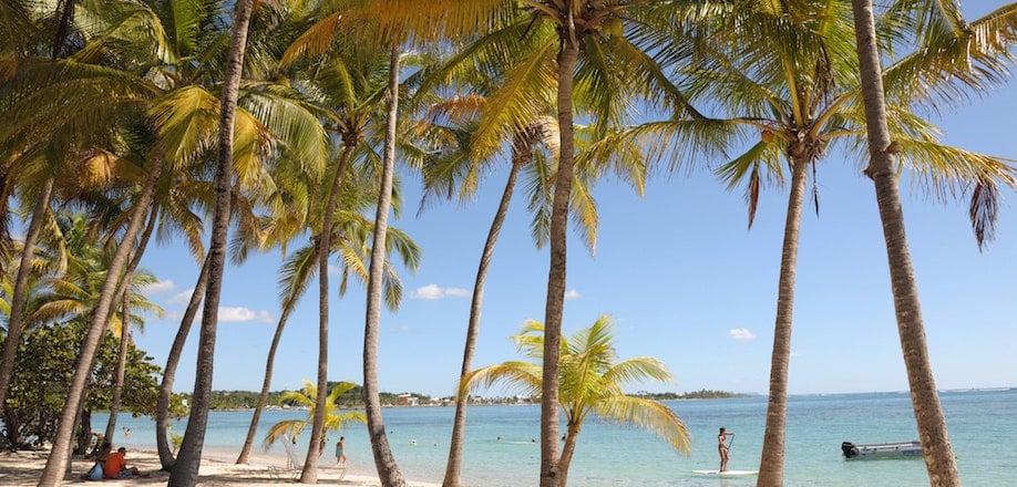 Où se trouvent les Sargassi en Guadeloupe?