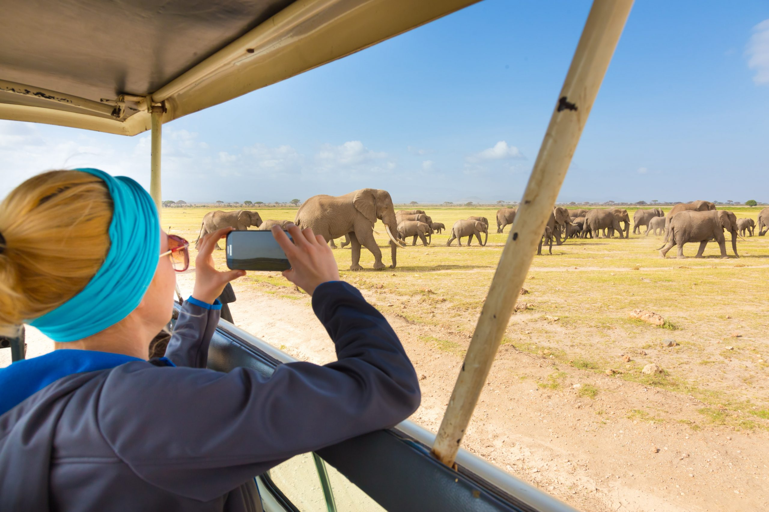 Où voir les girafes en Afrique?